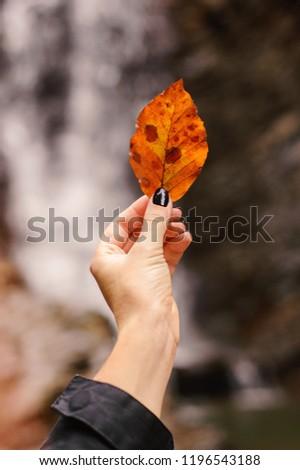 girl holding autumn leaf on nature autumn. Orange leaf. Autumn mood.Autumn, fall leaves #1196543188