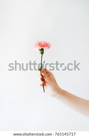 girl holds one carnation in her hand on a white background.