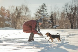 Girl in a red down jacket on walk with purebred beagle puppy in winter park. Woman and dog in forest. Girl runs and plays in the snow with pet. Winter sunny landscape. Stylish toning and soft focus.