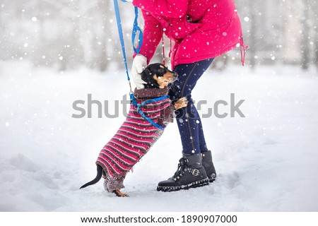 girl in black shoes on a walk with a dog on a leash in a winter park on a snow-covered path Foto stock ©
