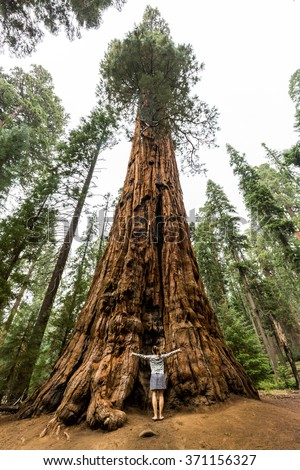 Girl in front of a giant sequoia (Sequoiadendron giganteum) tree located in the Giant Forest of Sequoia National Park, California, USA