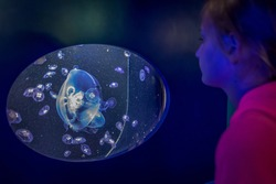 Girl Looking at Display of Jellyfish