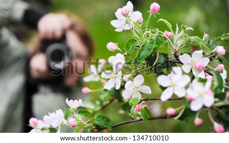 Girl-photographer takes a picture of blossoming branch. It is green around.