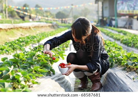 girl pick strawberry for fun in farm - stock photo
