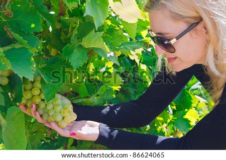 girl picking ripe grapes in vineyard