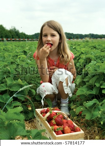 Girl picking strawberry in a field.