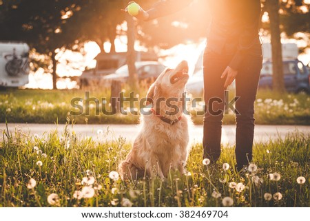Girl playing with her golden retriever dog in summer park, Soft focus with sun flare effect.