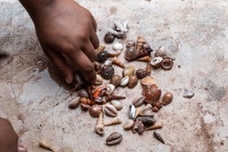 Girl's hand picking up sea shells on cement background. Shells collection from ocean vacation.