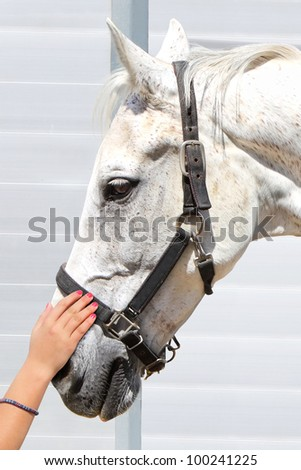 Girl's hand stroking a white horse