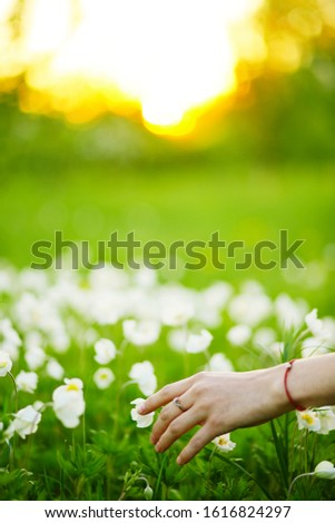 Girl's hand touches the flowers