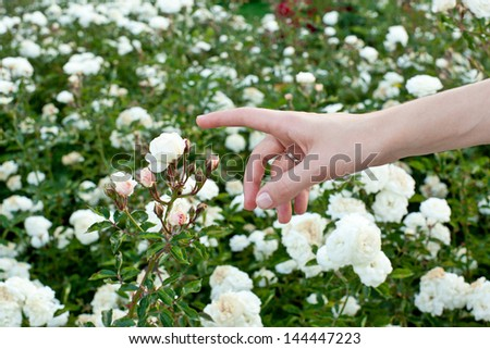 girl's hand touching the blossoming flower #144447223
