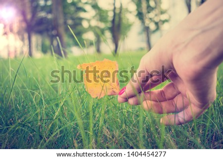 Girl shows yellowed leaf, woman's hand, close up, toned #1404454277