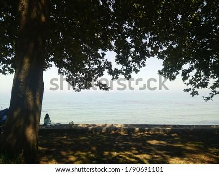 Girl sitting under a sycamore tree in beach Stok fotoğraf ©