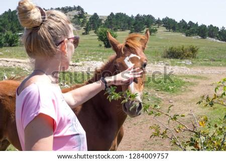 girl strokes foal #1284009757