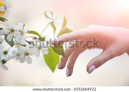 Girl touches flowering branch with hand. Cherry blossom tree. Spring bloom of sensuality. Touch the delicacy of nature. Tender girl's hand. Warmth and tenderness of nature. Spring weather