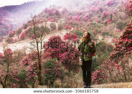 Girl tourist with a backpack behind her shoulders admiring the blossoming rhododendron forest in the Himalayas in Nepal.Beautiful view of the flowering rhododendron trees.Travel in the Himalayas