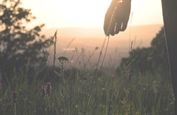 Girl walking in a meadow with wild flowers at sunset. Girl's hand touching wildflowers closeup. Rural field.