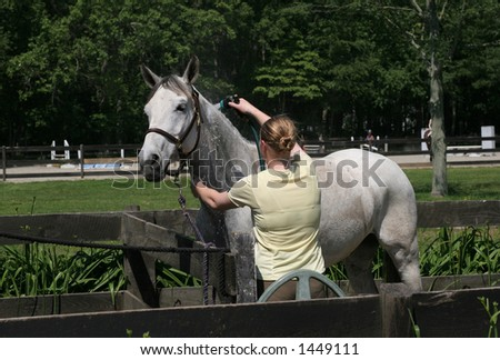 girl washing horse