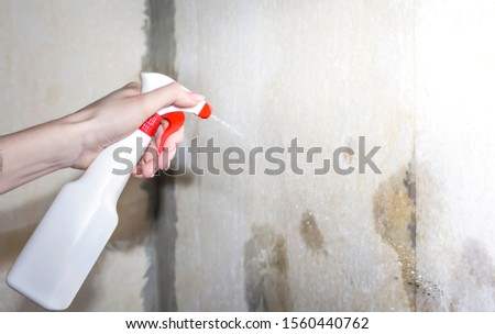 girl wetting the walls with water to remove the paper from the wall #1560440762