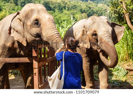 Girl wiht bananas in her hand feeds an elephant at sanctuary in Chiang Mai Thailand