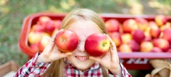 Girl with Apple holding in front of her face in the Apple Orchard. Beautiful Girl Eating Organic Apple in the Orchard. Harvest Concept. Garden, Toddler eating fruits at fall harvest. Apple pi