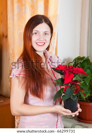 Girl with Christmas Star flowers in   flowering pot at her home