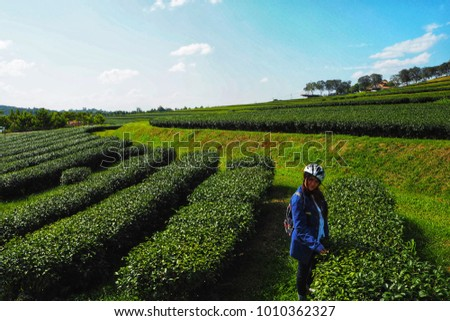 Girl women to travel in the tea  plantation #1010362327