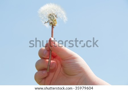 girls hand with dandelion