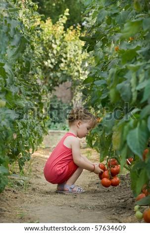 girls picked tomatoes - stock photo