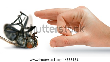 Give Pests The Flick With An Isolated Hand Flicking A Huge Dead Fly