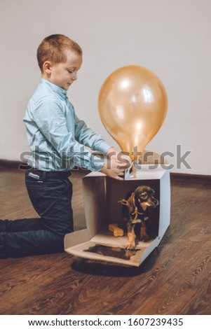 Giving puppy as gift. Kid, little boy getting surprised with dachshund puppy. Pet Lovers, Animal Lovers Gift. Getting a Puppy for Birthday.