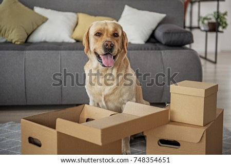 Glad animal companion locating near open packages