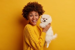 Glad dark skinned pet owner raises little spitz dog in hands, dressed in casual outfit, talks to lovely domestic animal, celebrate bithday together, stand against yellow background, found stray animal
