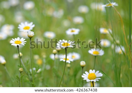 Glade with daisies spring flowers glade with small white flowers glade with daisies spring flowers glade with small white flowers bright summer photo mightylinksfo