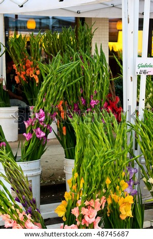 Gladiolus flowers at outdoor farmers market