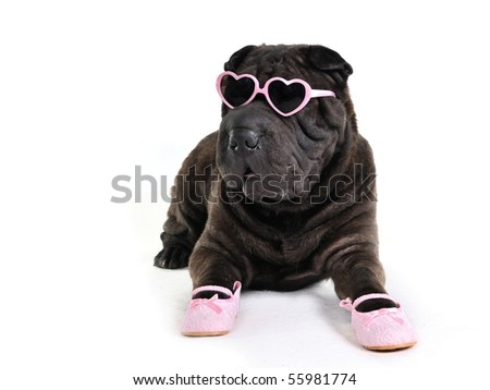 Glamour Dog in Glasses and Shoes