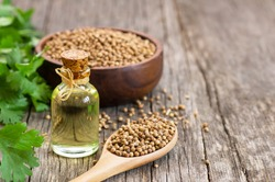 Glass bottle of coriander essential oil with coriander powder and fresh cilantro leaves on wooden table, aromatherapy massage oil concept ( coriandrum sativum )