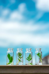 Glass bottles, test tubes with plant sprouts on background blue sky. Natural skin care, organic cosmetics and food. Concept of alternative medicine