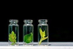 Glass bottles, test tubes with plant sprouts on black background. Natural skin care, organic cosmetics and food. Concept of alternative medicine