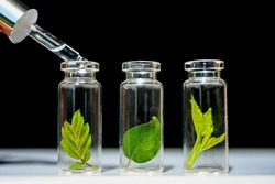 Glass bottles, test tubes with plant sprouts on black backgroundNatural skin care, organic cosmetics and food. Concept of alternative medicine