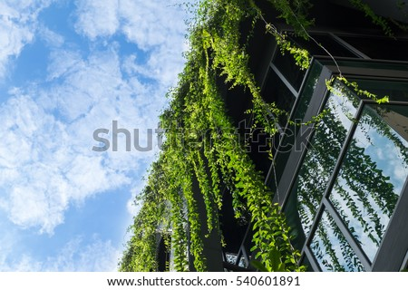 Glass building house covered by green ivy with blue sky #540601891