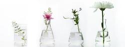 glass flask and beaker with pink white flower and green plant biotechnology cosmetic science white web banner background