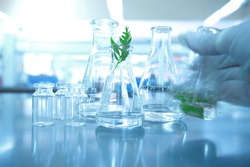 glass flask and bottle with testing of nature green leaf with water and hand of scientist shaking liquid motion in biotechnology laboratory background