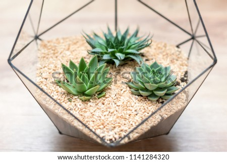 Free Photos Decorative Glass Vase With Succulent And Cactus Plants