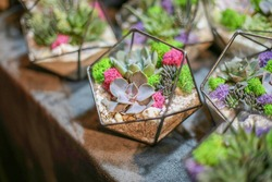 Glass geometric florarium, terrarium, in octahedron form with succulent stone rose, sand, green violet moss, pebbles and shells. Metal handmade vase planter for home decor and wedding table decoration