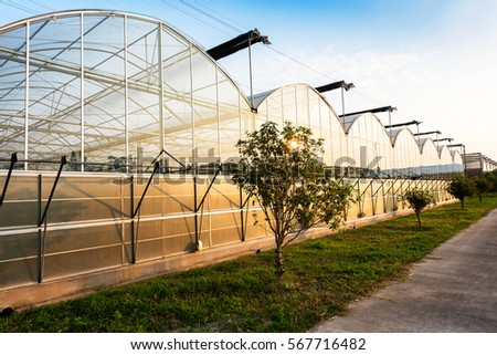 Glass greenhouse planting vegetable greenhouses