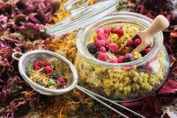 Glass jar of medicinal plants - helichrysum, wild marjoram, red and black currant berries, tea infuser of dry medicinal herbs. Heaps of dried echinacea, calendula, rose petals. Alternative medicine.