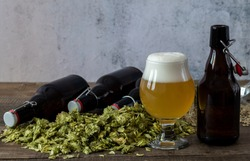 Glass of craft pale ale with beer growlers and green dry hops. Home brewing. Copy space.