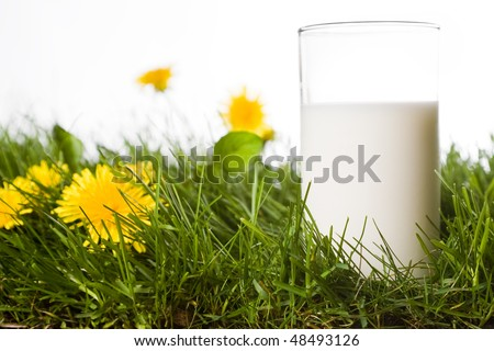 glass of milk isolated white background