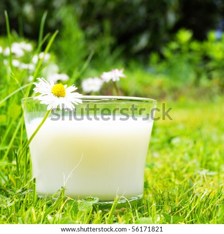 glass of milk on green grass and flower showing food concept
